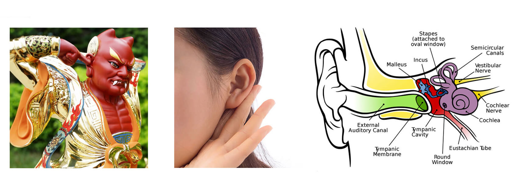 Cochlear Implant Magnets-1